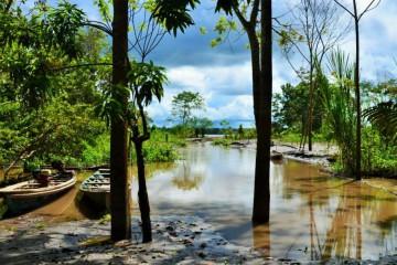 Dschungel Peru