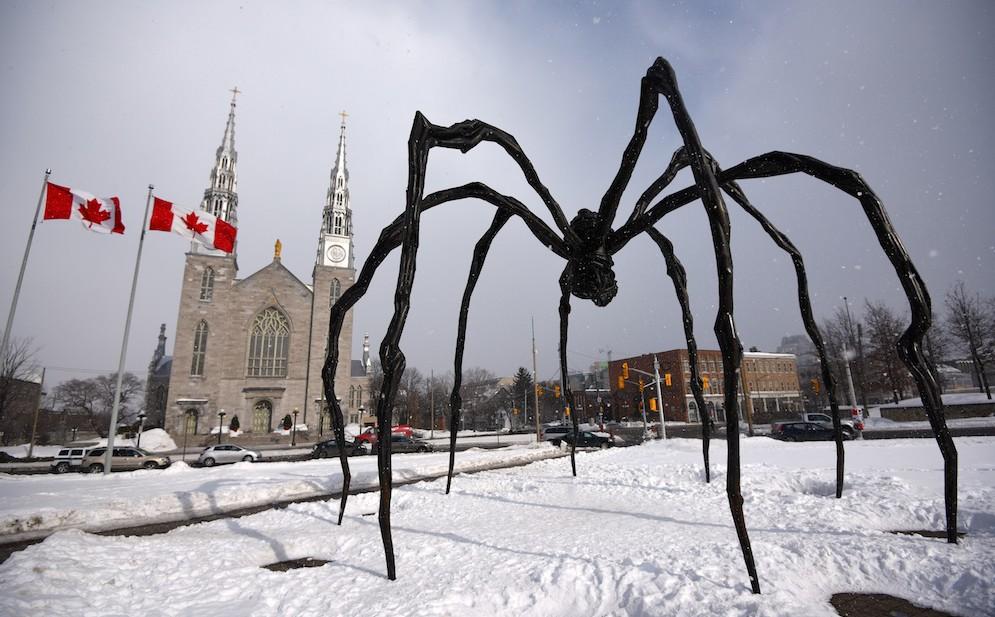 Spinne Ottawa