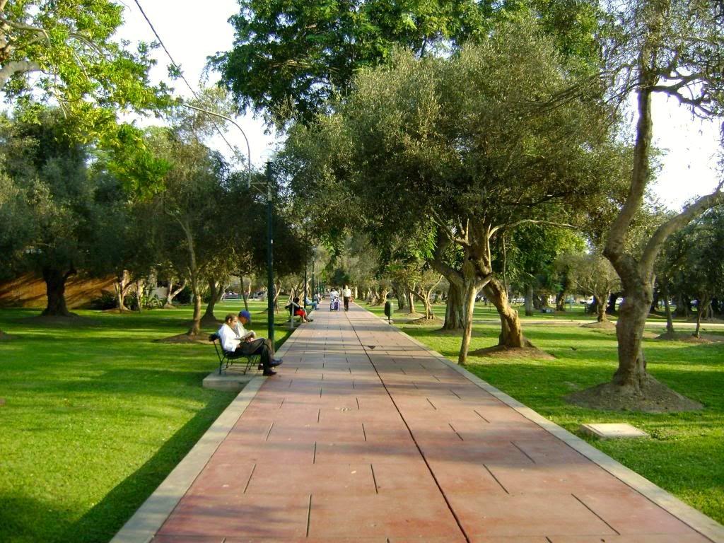 Parque el Olivar